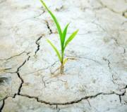 parched groung plant